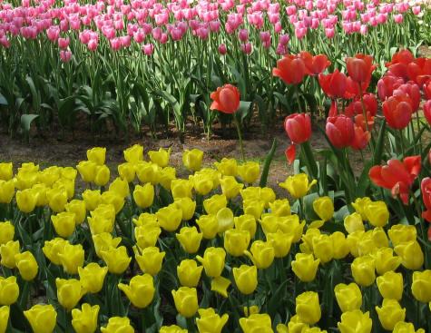 Beautiful flowers garden house - Botanic Gardens In Delft Holland Netherlands Botanisch Tuin